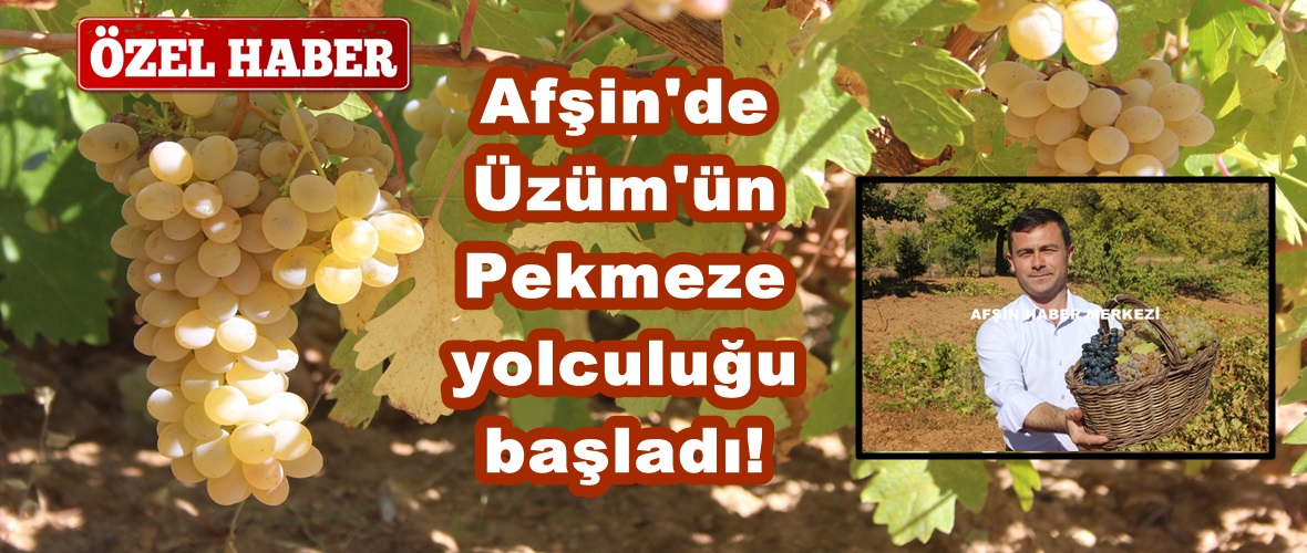 Afşin'de Üzüm'ün Pekmeze yolculuğu başladı!